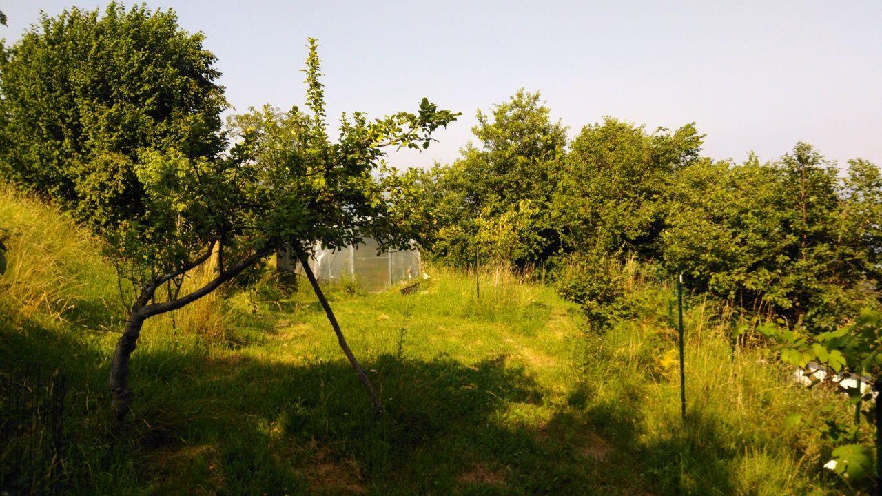 Terreno adibito a orto e frutteto